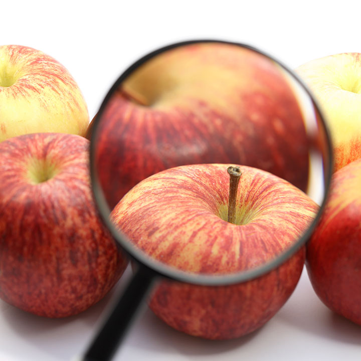 apples with magnifying glass
